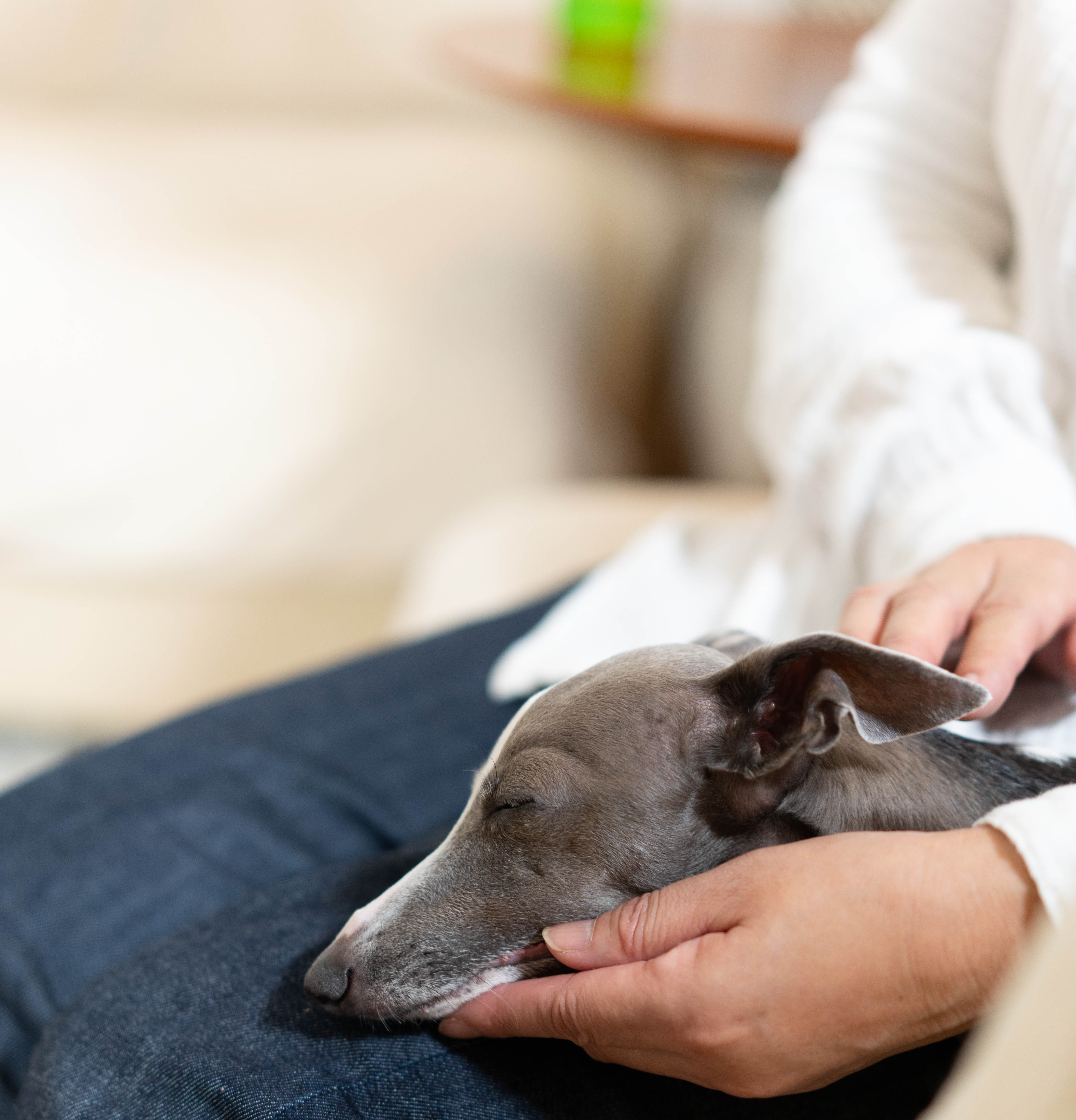 悩みセクションの犬画像
