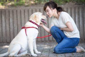 犬と話す飼い主